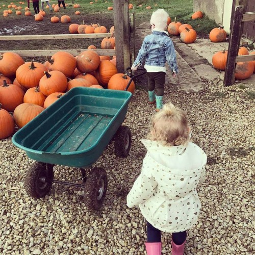 Pumpkin Patch Starts 6th – 31st October 10am – 4pm